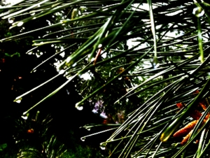 pine_abstraction1