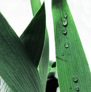 rainy_spring1