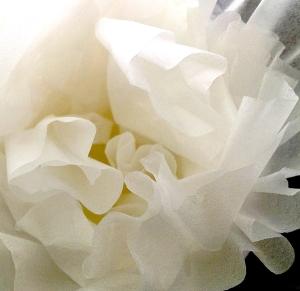 filter_flower_2-20-17